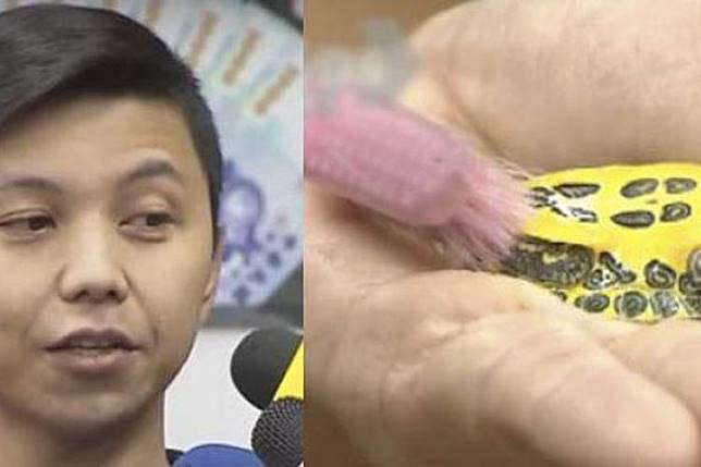 Sempat Viral, Asisten Rumah Tangga ini digaji Rp 36 Juta Hanya untuk membersihkan kura-kura