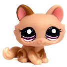 Littlest Pet Shop Gift Set Kitten (#1444) Pet