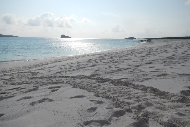 Gardner Bay Galapagos tortoise track