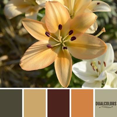 Color Paleta 87