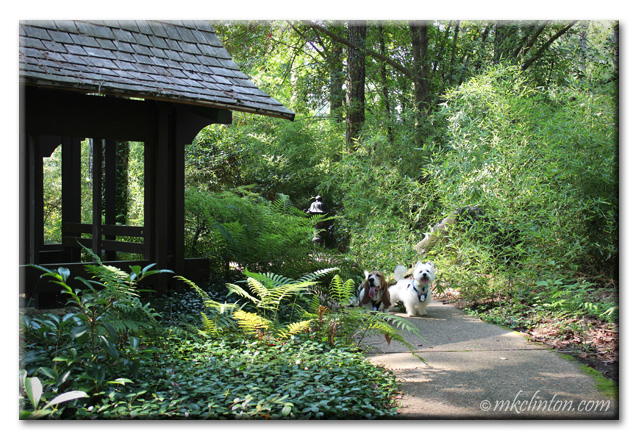 Bentley Basset & Pierre Westie at American Rose Center