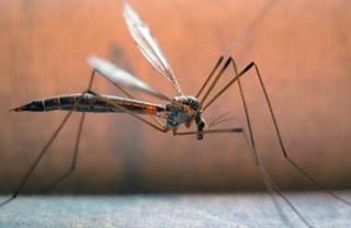 Σε καραντίνα η μισή Ελλάδα για ελονοσία