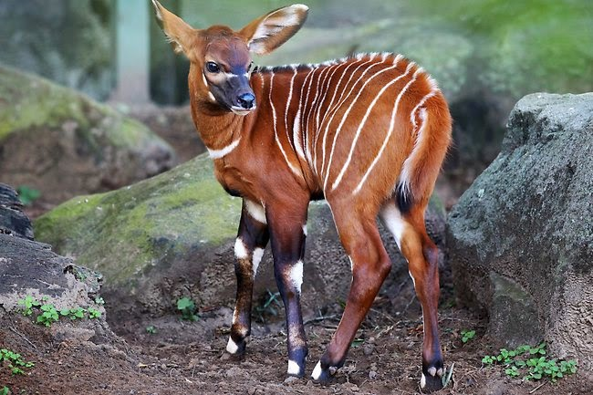 Animal Lovers Top 10 Cutest Animals You Have Never Heard Of