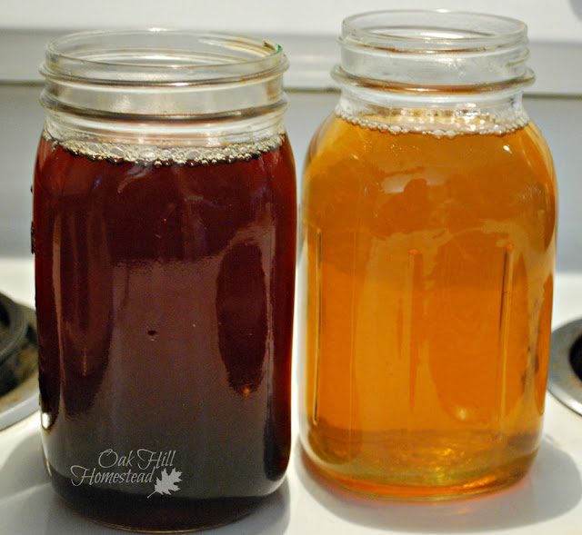 Kombucha brewed with black tea on the left and green tea on the right.
