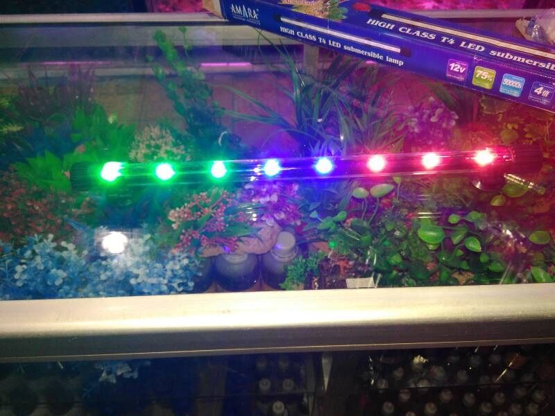 Gambar Harga Ikan Parrot, Asal Usul Dan Cara Merawatnya Dengan Lampu Yang Baik