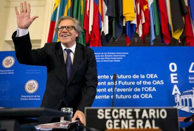 Desarticulación de Alba y Unasur reinstitucionaliza a la OEA, afirma Giovanna De Michele