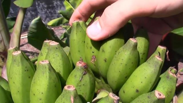 Buah Yang Mengandung Vitamin C Paling Tinggi
