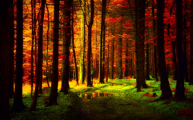 Fall Trees Iphone Wallpaper Linkamigratis 12 Sfondi Desktop Quot Autunno Quot 1440x900