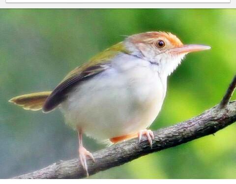 Ngeri, 5 Burung Ini Memiliki Mitos Yang Diantaranya Bikin Merinding