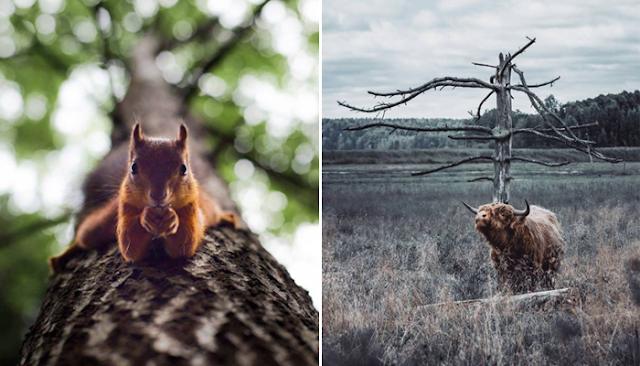 Tiernas-fotografías-de-animales-silvestres