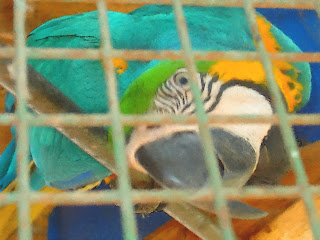 A Curiosa Arara do Zoo de Luján