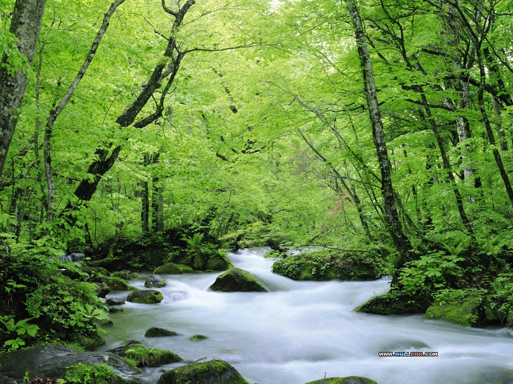 Wallpaper Nature Free Download - Free HD Wallpaper