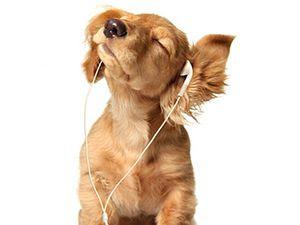 Está comprovado  a música clássica pode ter efeito positivo sobre o  comportamento dos cães 273a53c2e7