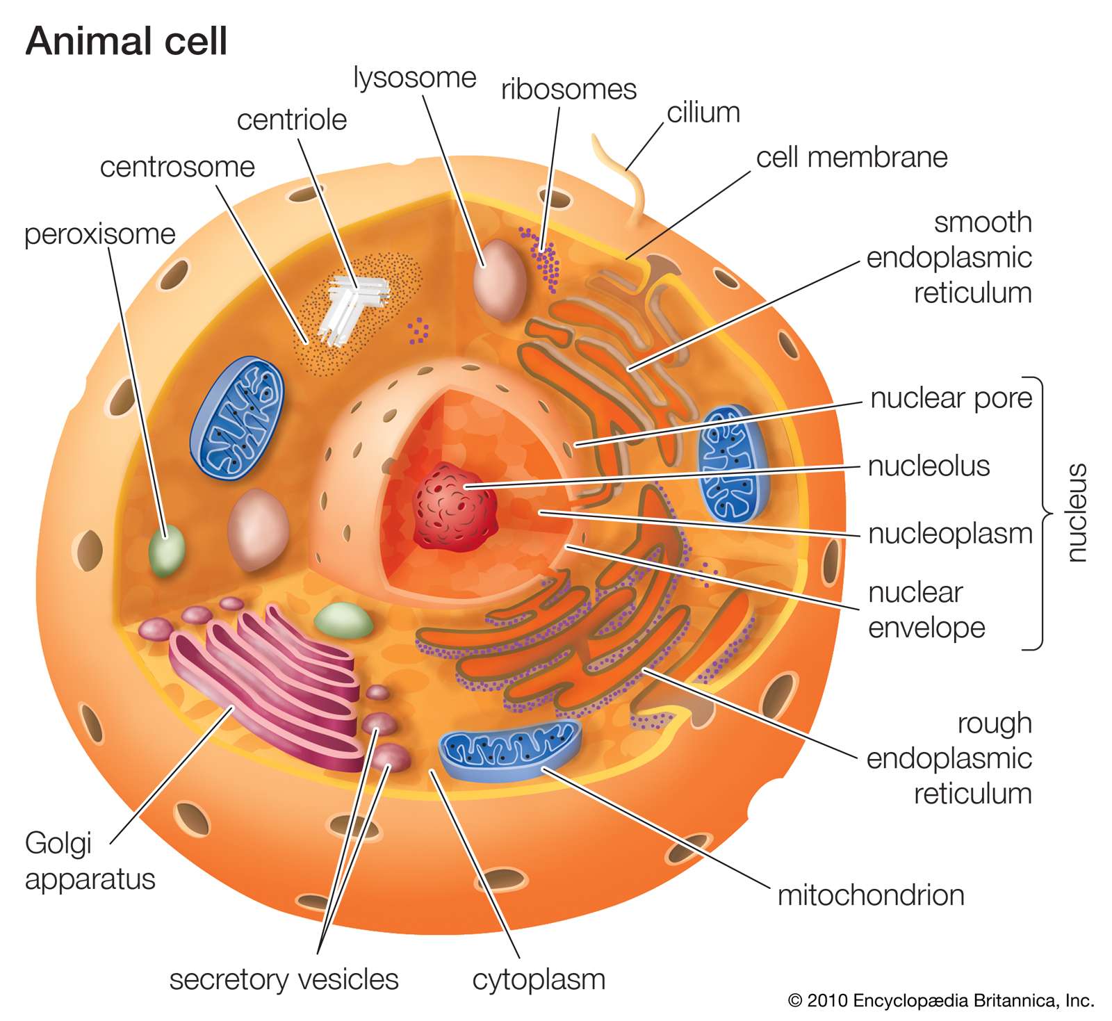 Mitosis And Meiosis Venn Diagram Answers External Wastegate Superb Muslimah: Azharian