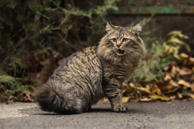 http://www.travelerjes.com/2019/01/10-pics-stray-cat-photos-long-hair.html