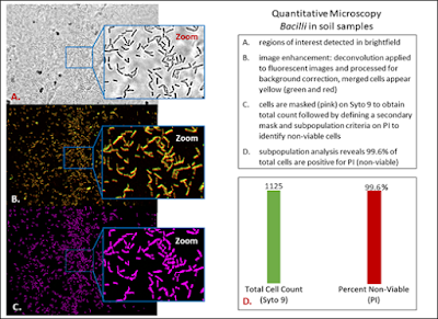 Quantiative Microscopy Bacilli in soil samples