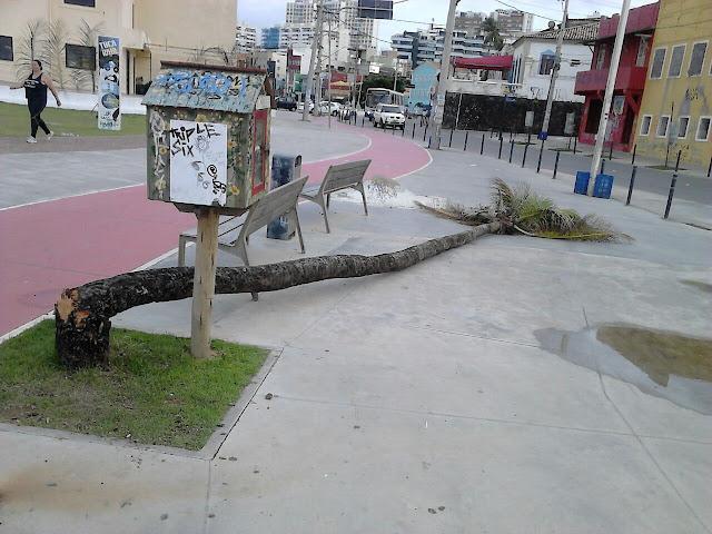 Árvore caida
