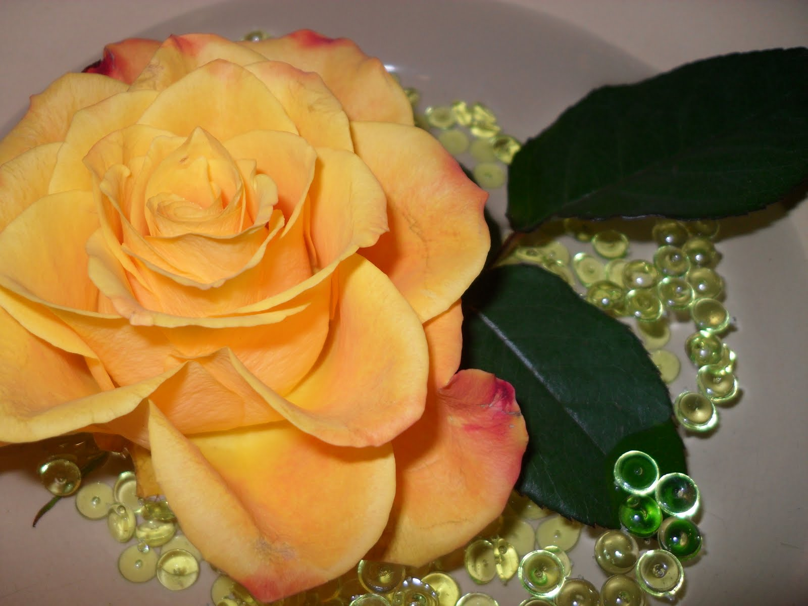 Beautiful flower wallpapers for you beautiful flowers - Peach rose wallpaper ...