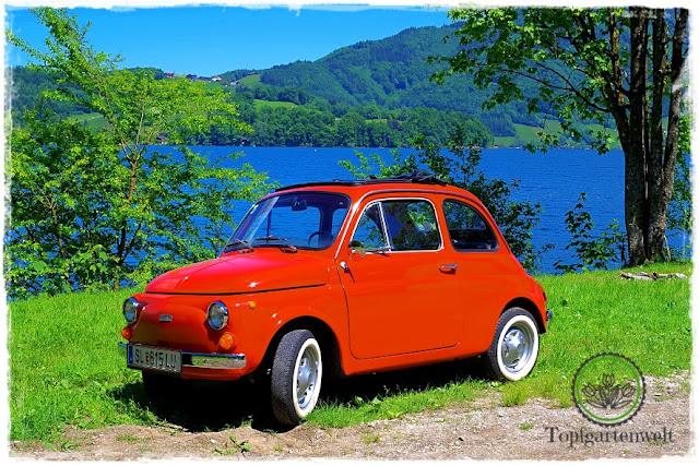 Gartenblog Topfgartenwelt Fiat 500 Oldtimer: unser Bild für die Teilnahme beim Fotowettbewerb 2017
