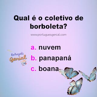 Coletivo de borboleta - Qual é o coletivo de borboleta?
