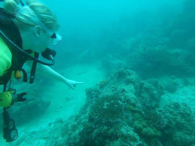 Tauchkurs Phi Phi Island