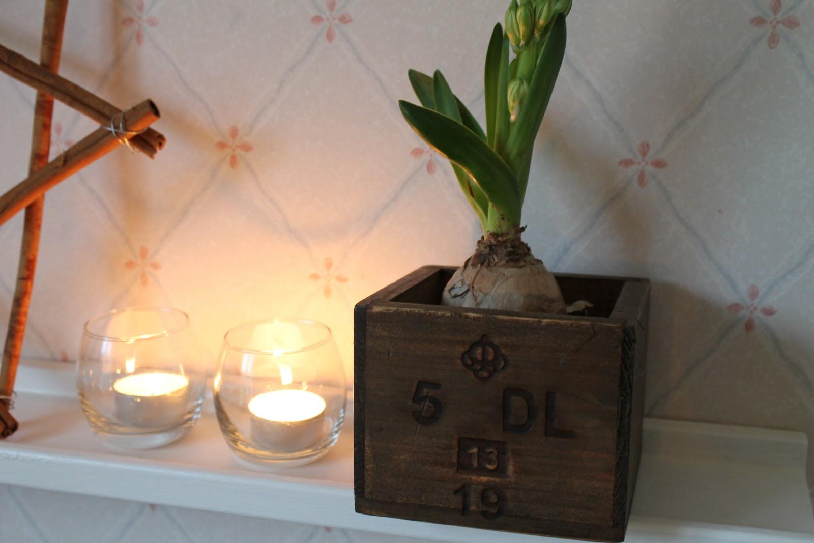 Den här hyacinten satte jag i en trälåda. Ryms perfekt (har satt lite  plastfolie i botten). Lådan var en av grejorna som fick följa med hem från  Ullared för ... 3f6042cdcb5bd