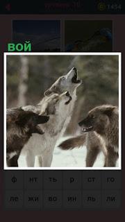 в лесу несколько волков воют, подняв свои морды