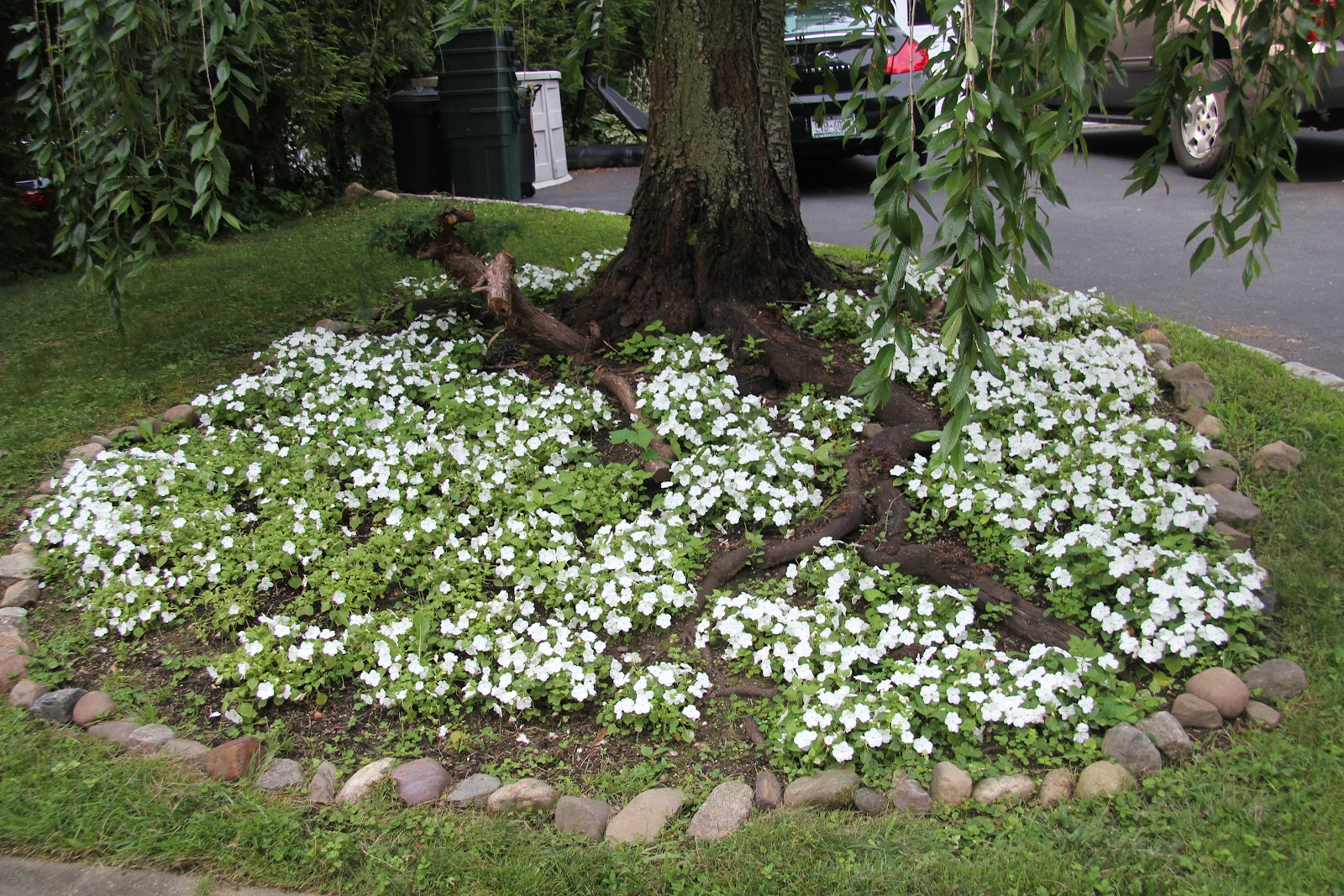 Delighful Flower Garden Ideas For Around Trees Large Tree This