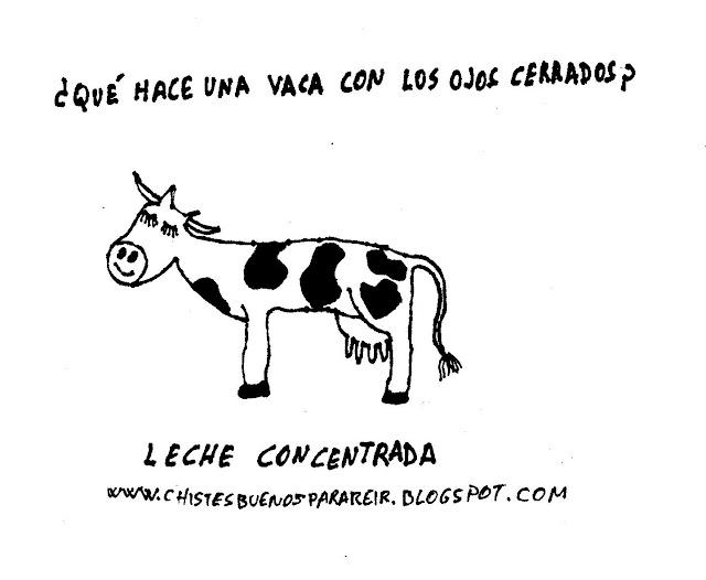 ¿Qué hace una vaca con los ojos cerrados? Leche concentrada