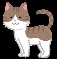 猫の模様のイラスト(キジ白)