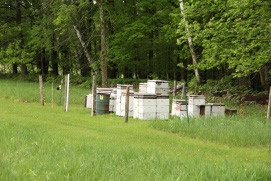 honeybee hives protected by electric fencing