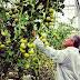 Extra impuls voor initiatieven die economie verduurzamen