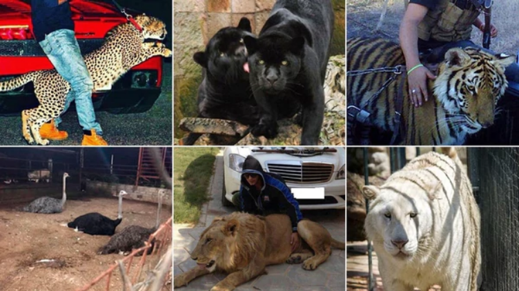 Los narcos y sus animales exóticos, al menos 527.000 ejemplares han capturado autoridades mexicanas