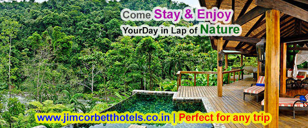 Book the Best Hotel for You and Your Family in Jim Corbett National Park