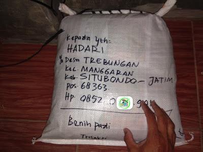 Benih pesana    HADARI Situbondo, Jatim.   (Sesudah Packing)