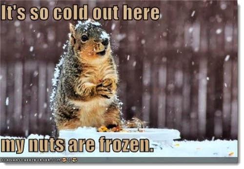 Ardilla congelandose