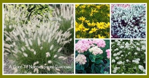A GUIDE TO NORTHEASTERN GARDENING Drought Tolerant