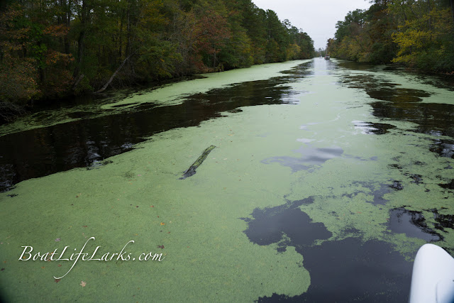 Boater encounters a log leaving the Dismal Swamp Canal