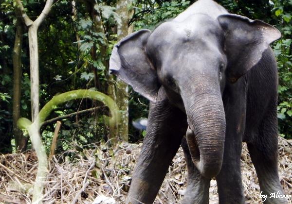 elefanti-India