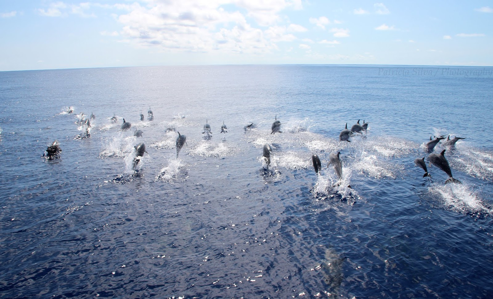a group of dolphins jumping on azores
