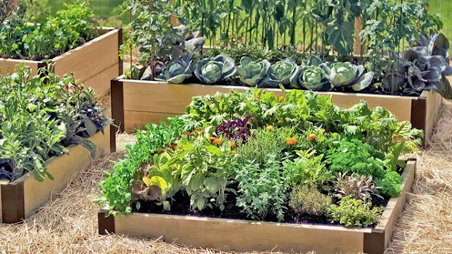 Picking the Ideal Location for your Garden