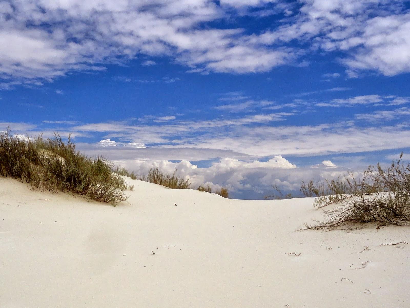 danger garden: White Sands National Monument