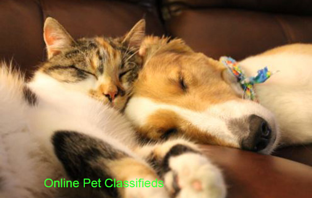 Top Free Pet Classified Ads Sites List - Online Pet Advertising