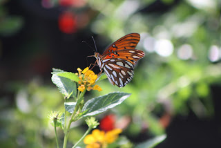 Butterfly Vivero Growers Nursery Austin