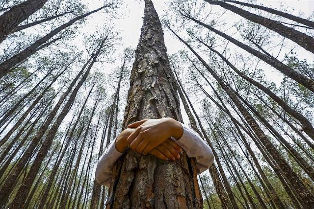 """""""Abrazar árboles"""""""