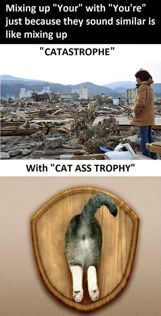 Funny Your Catastrophe Grammar Meme Joke Picture