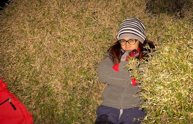 dwarf bamboos mt pulag