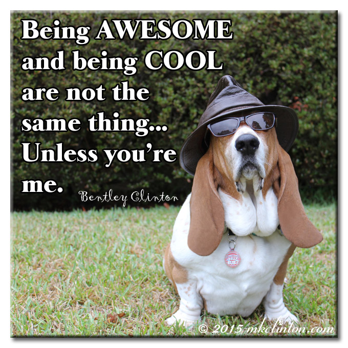 Bentley Basset Hound is cool and awesome meme
