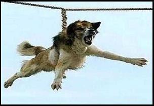 इस गाँव में कुत्तों के साथ किया जाता है ऐसा गंदा काम - Kutto ko ghumane ki prtha