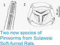 http://sciencythoughts.blogspot.co.uk/2014/12/two-new-species-of-pinworms-from.html